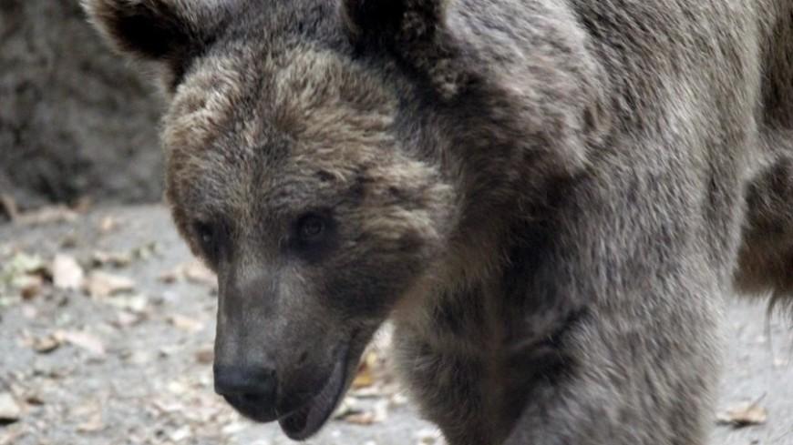 На льдине, как на бригантине: в Якутии спасенного на реке медвежонка назвали Умкой