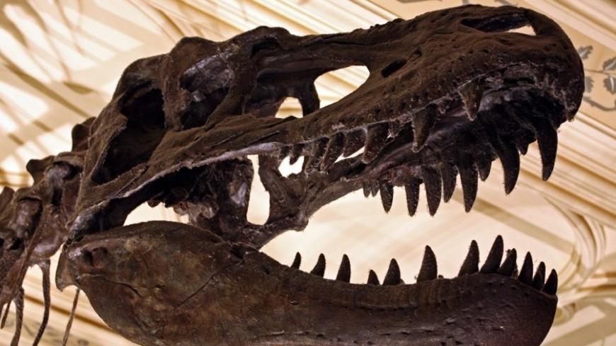 Найден миниатюрный предок тираннозавров