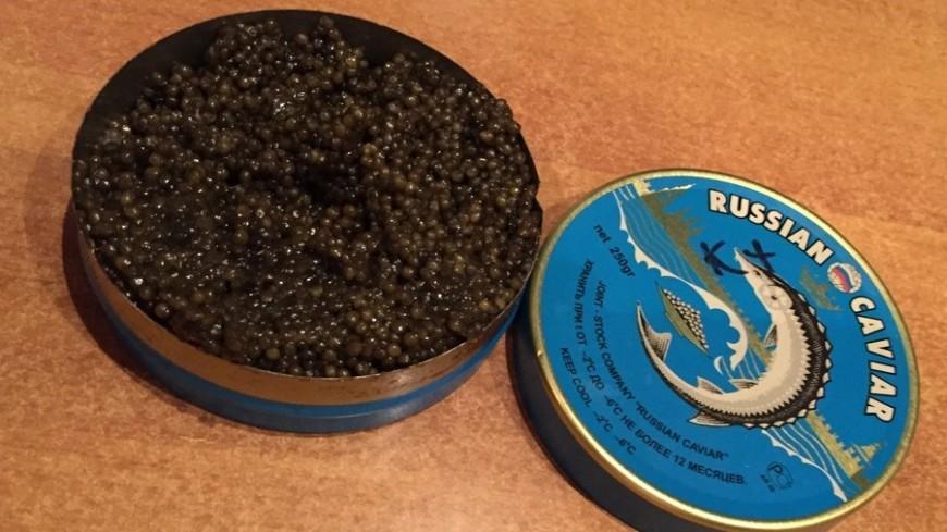 Крупный улов: более 80 кг черной икры изъяли в Хабаровском крае