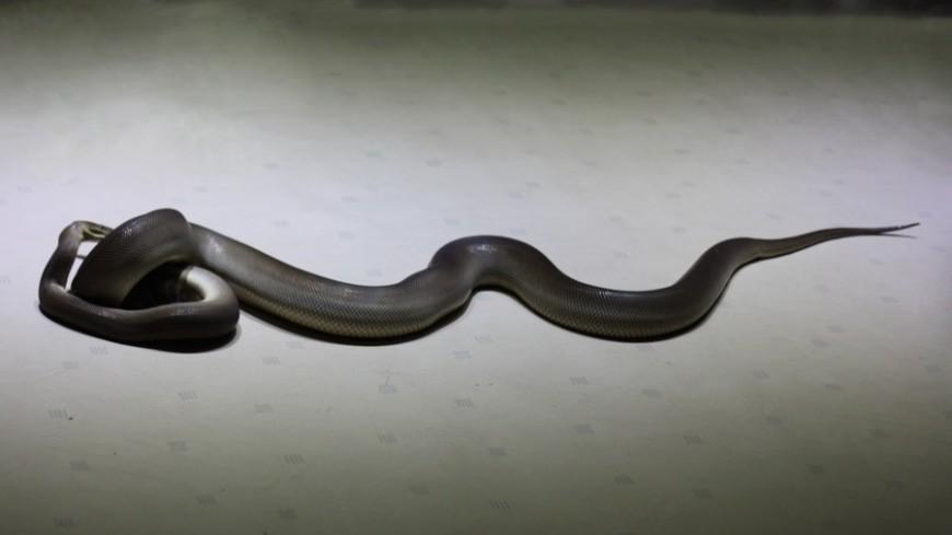 "Фото: Елена Карташова, ""«МИР 24»"":http://mir24.tv/, змеи, рептилии, змея"