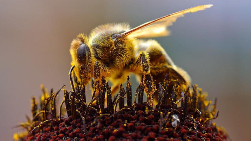 В Грузии массово гибнут пчелы