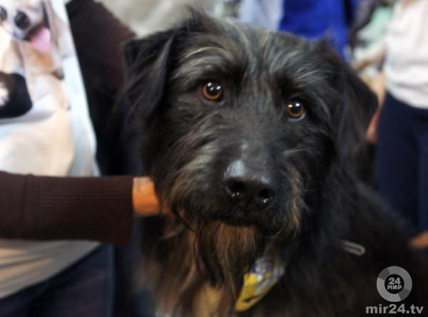 Пес из-за редкой мутации так и остался щенком