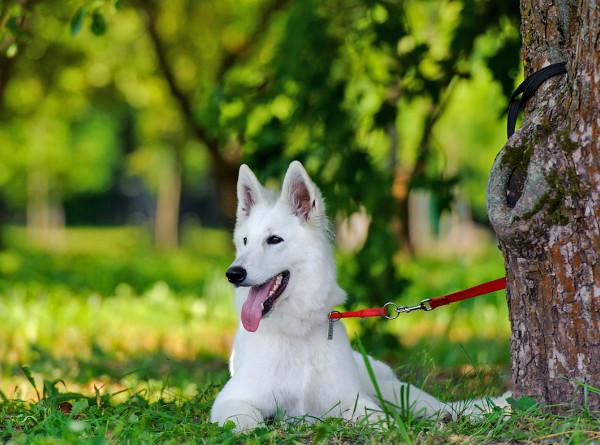 Собачья жизнь: ученые узнали, как стареют собаки