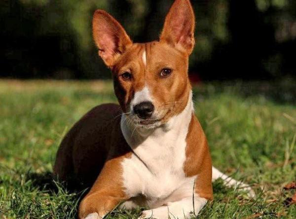Тест: насколько хорошо вы знаете породы собак?