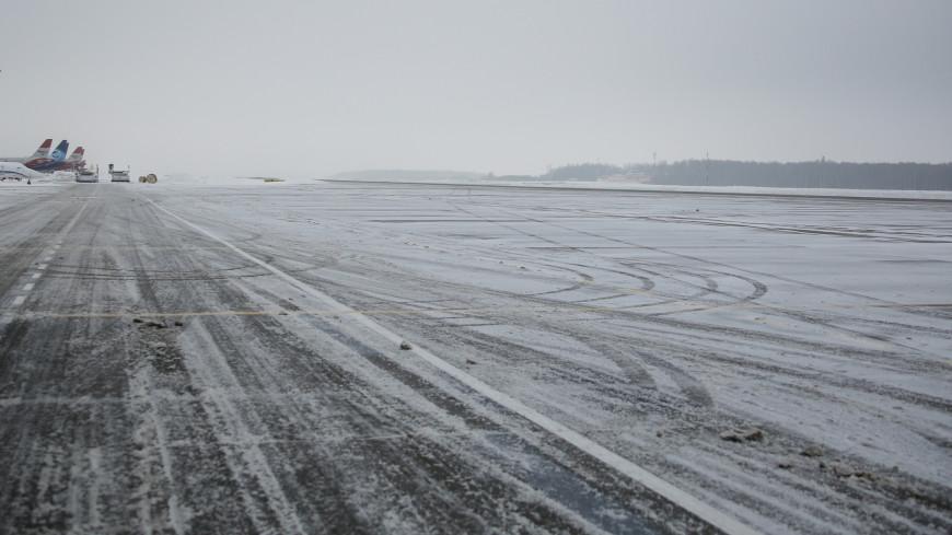 Собака помешала самолету приземлиться на аэродроме с первого раза