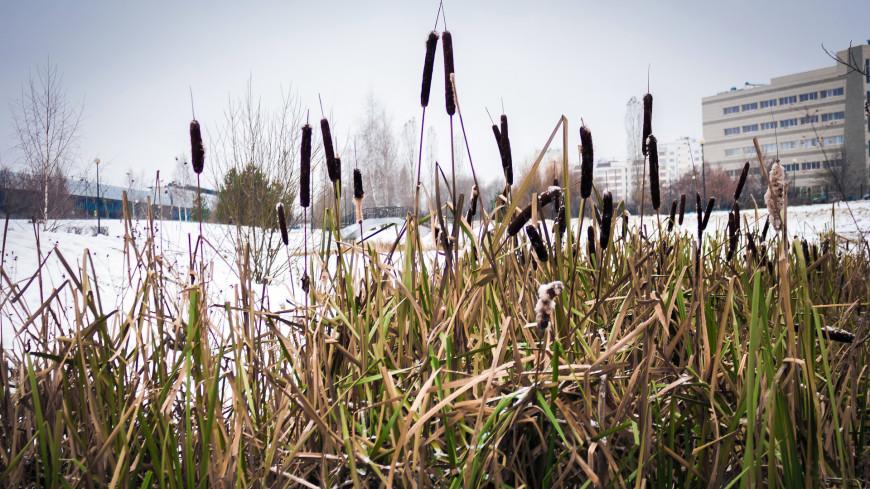 Зима в городе (снег, сугроб, холод, мороз, камыш, трава)