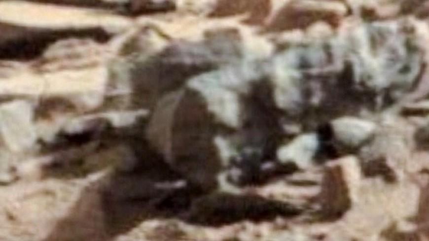 На снимках с Марса заметили огромных жуков