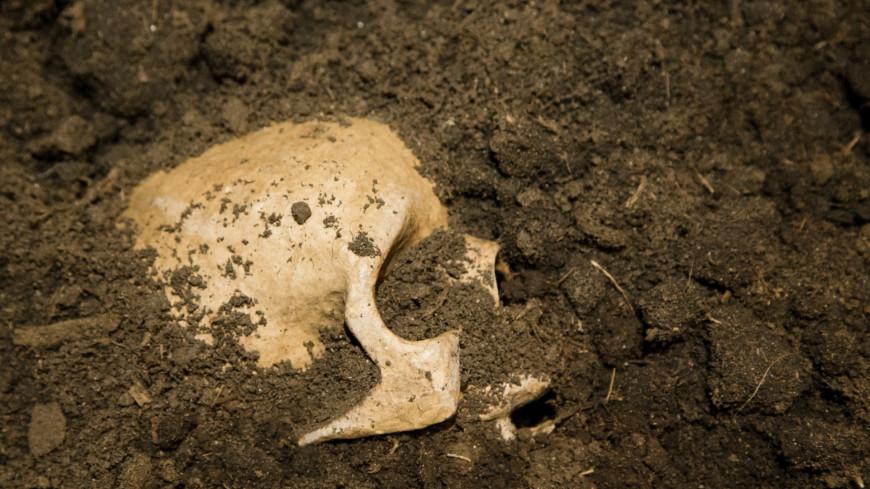 выставка памяти юрия любимова, юрий любимов, музей москвы, музей, выставка, скелет, раскопки, череп, могила,