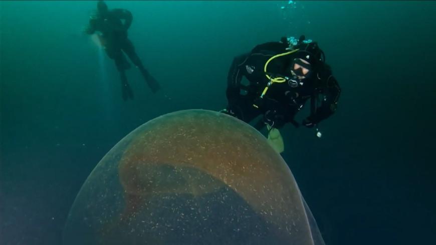 На дне Северного ледовитого океана нашли кладку яиц кальмара