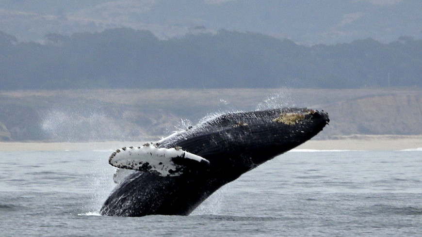 Генетики раскрыли тайну эволюции китов