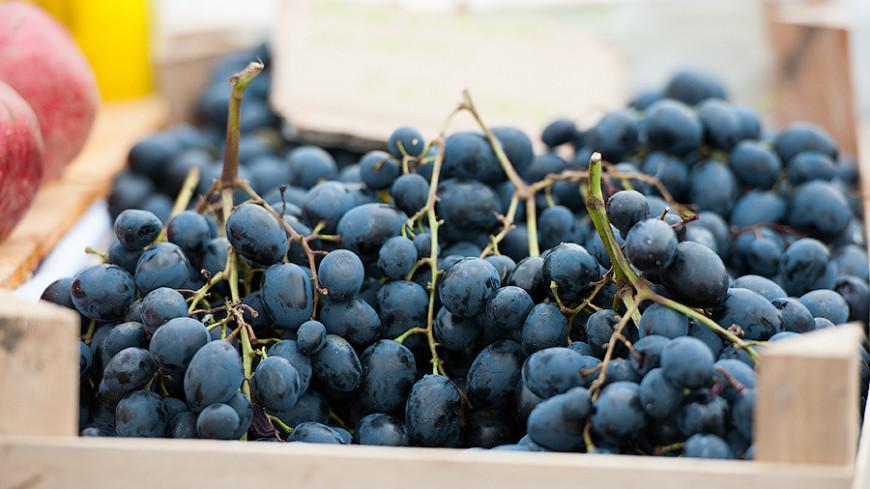 Опасный виноград: иглы в ягодах снова нашли в Австралии