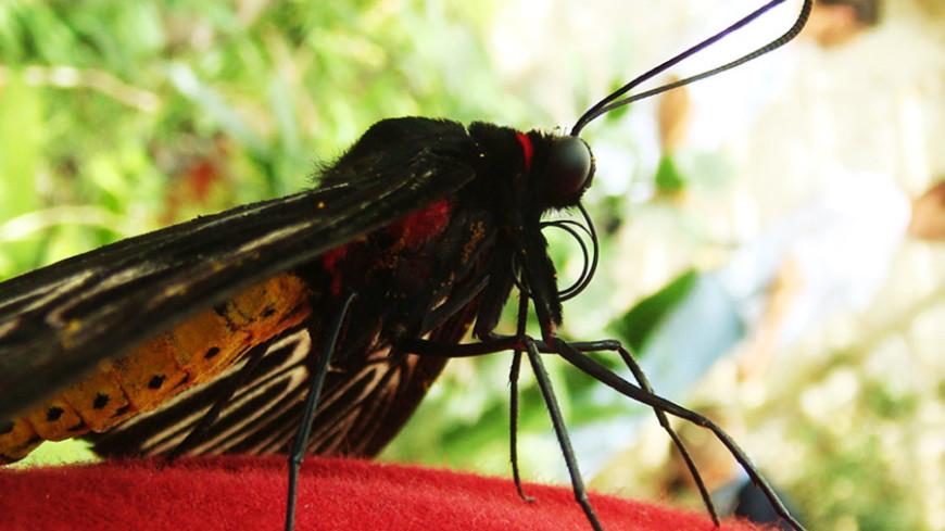 © Фото: «Мир 24», бабочка