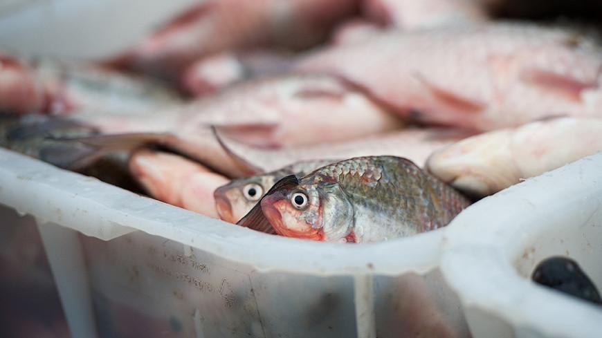 Ученые предложили выдавать населению рыбий жир