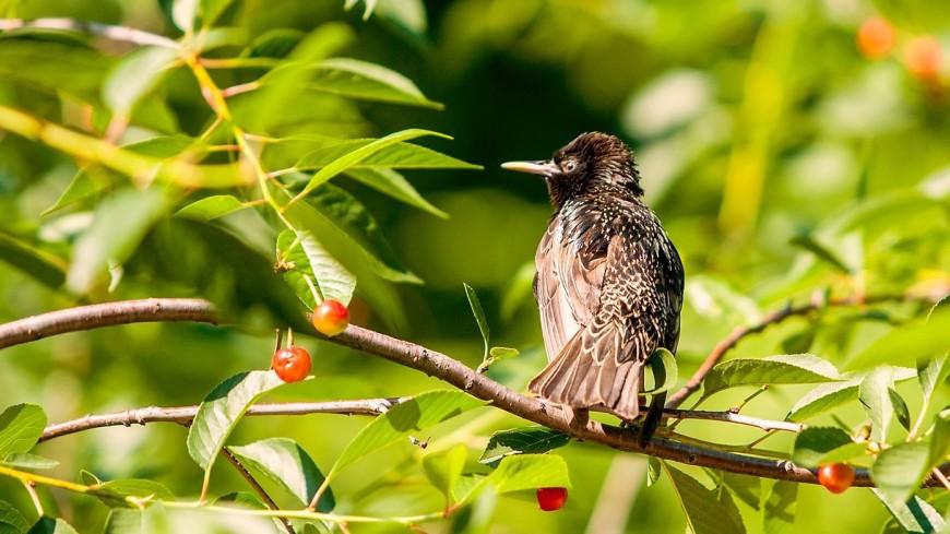 Орнитологи подсчитали российских птиц