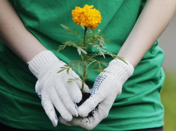В WWF назвали самые экологичные профессии будущего