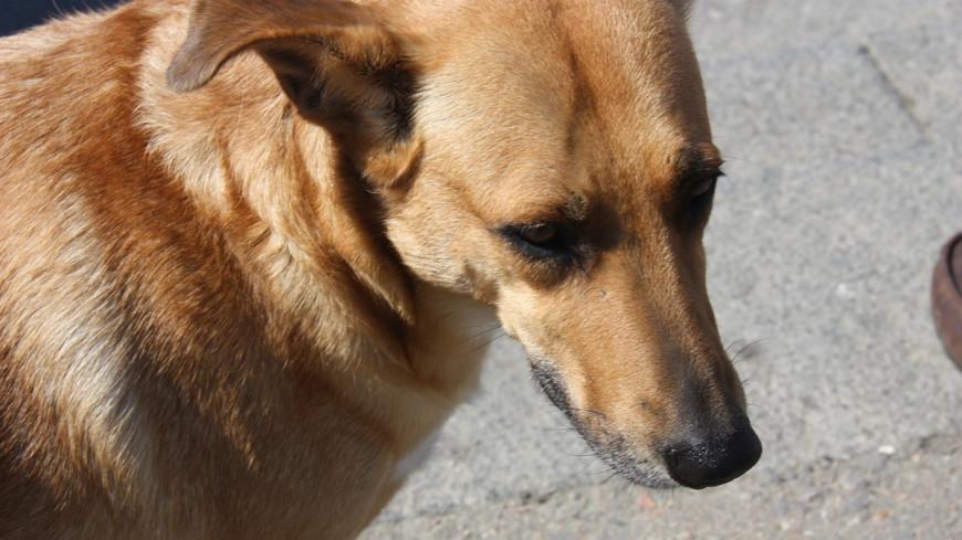 """Фото: Мария Чегляева, """"«Мир 24»"""":http://mir24.tv/, грустная собака, собака"""