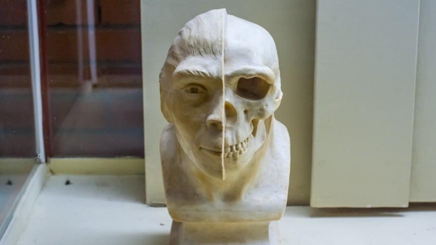 Ученые впервые реконструировали облик загадочного древнего человека