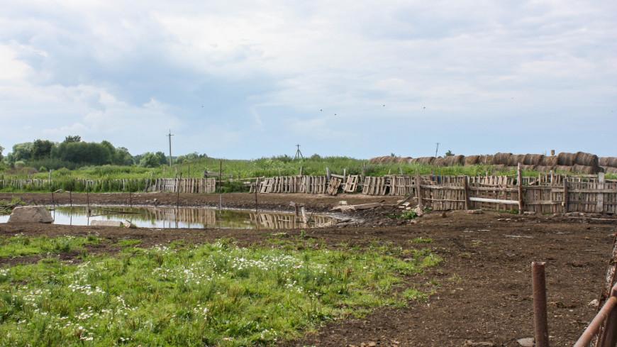 природа, деревня, поле, дача, огород,