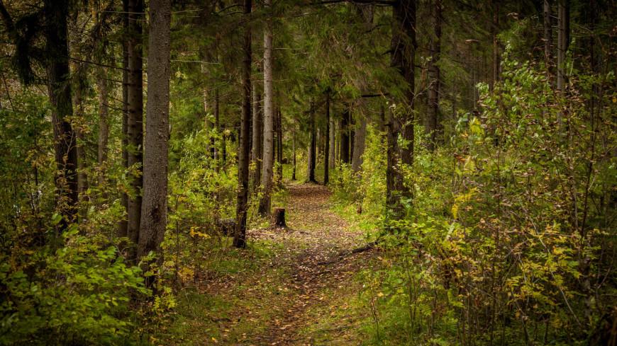 "Фото: Марина Дыкун (МТРК «Мир») ""«Мир 24»"":http://mir24.tv/, озеро валдай, лес, деревья, дерево, тропа"
