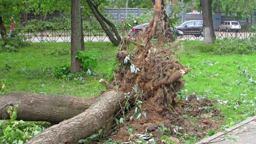 Дерево придавило воспитанников детсада в Краснодаре: погиб ребенок