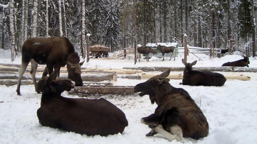 Минприроды РФ в 400 раз повысило оценку стоимости всех зверей страны