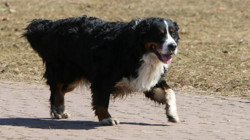 Стало известно, у каких хозяев собаки страдают от лишнего веса