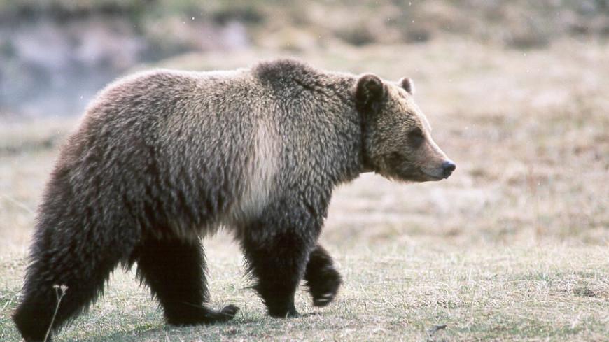 Охотник застрелил медведицу-гризли и прославился в Сети