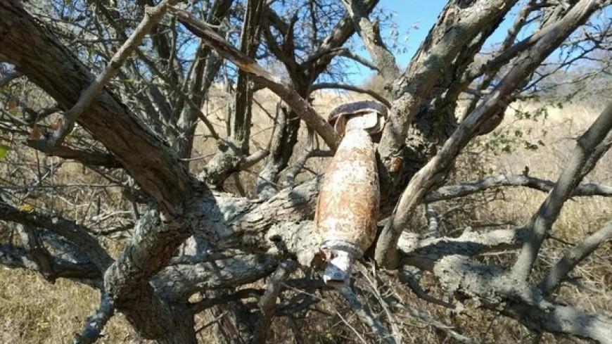 В Крыму на дереве нашли немецкую бомбу времен Великой Отечественной