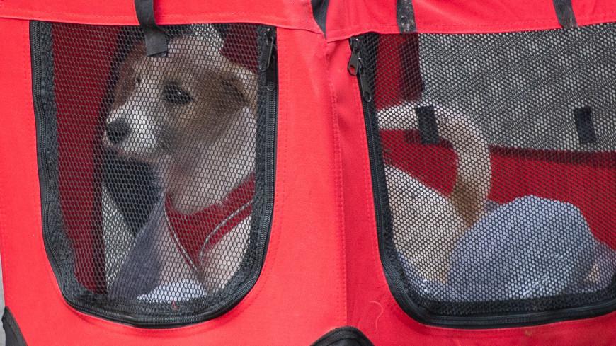 У кота Бориса Джонсона появился новый сосед – щенок породы джек-рассел