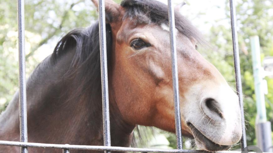 "Фото: Татьяна Константинова, ""«Мир24»"":http://mir24.tv/, лошадь, лошади"