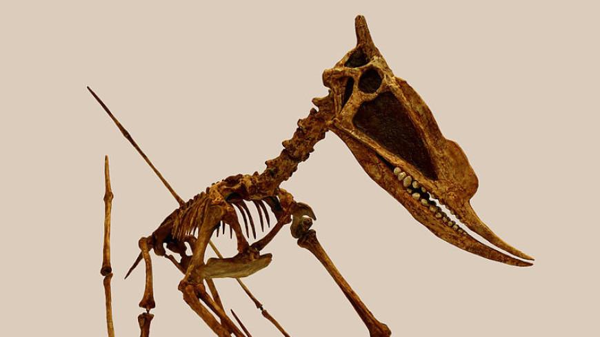 Палеонтологи рассказали о привычках уникального птерозавра