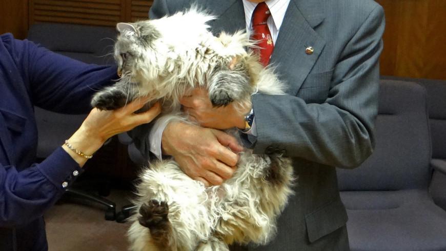Подаренного Путиным японскому губернатору кота отправили на карантин