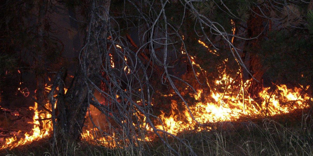 Площадь лесных пожаров в Якутии возросла на 60% за сутки