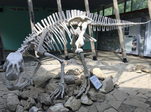 В Новой Зеландии обнаружили ближайшего родственника динозавров