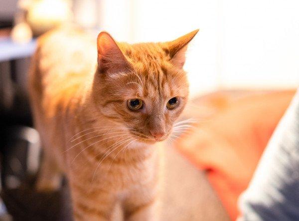 Ветеринар: пандемии COVID-19 среди животных нет. ЭКСКЛЮЗИВ
