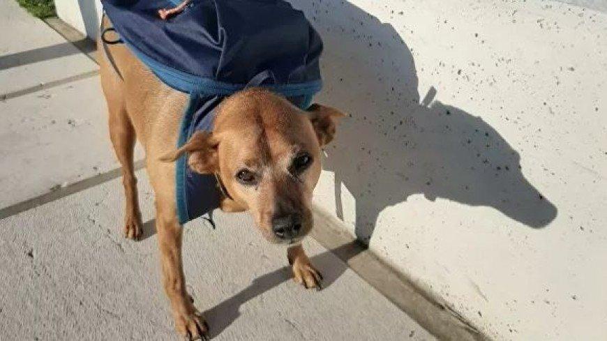Собака-курьер получила награду за помощь во время пандемии COVID-19