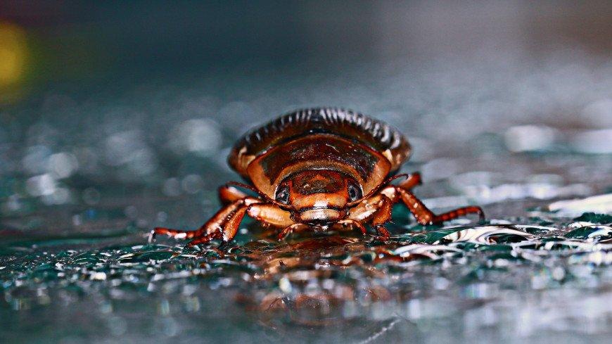 Выход есть всегда: жук-водолюб способен выжить даже съеденным