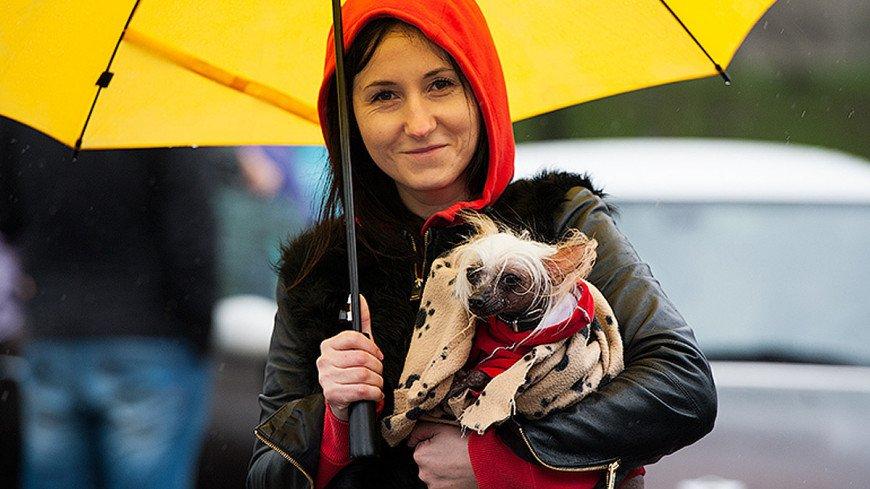 "Фото: Анна Тимошенко, ""«МИР 24»"":http://mir24.tv/, собака, девушка, девушка с собакой"