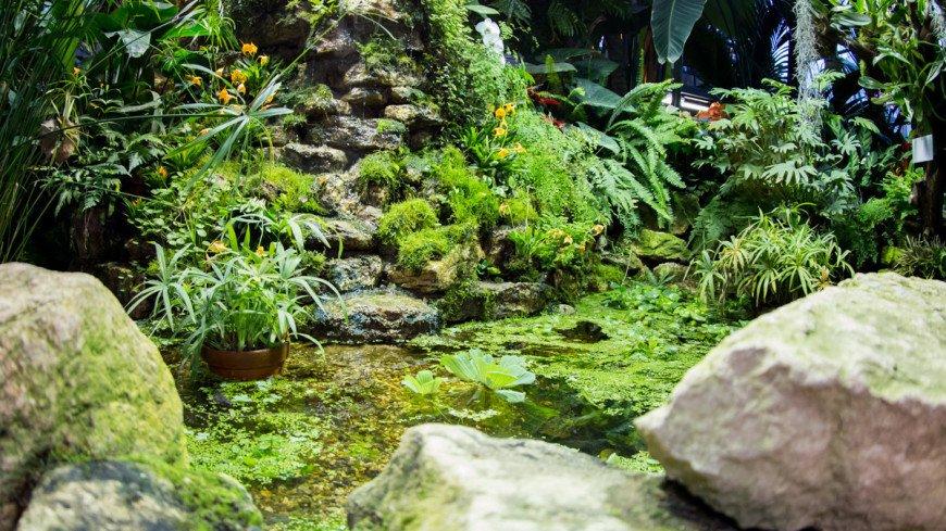 """""""Фото: Максим Кулачков (МТРК «Мир»)"""":http://mir24.tv/, ботанический сад, цветы, растения, флора, зелень, парк"""