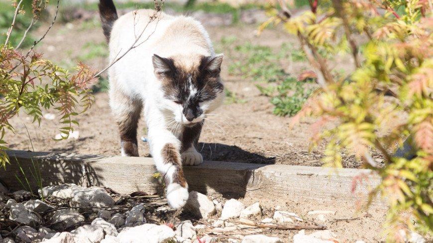 "Фото: Максим Кулачков, ""«Мир 24»"":http://mir24.tv/, кошка, кот"