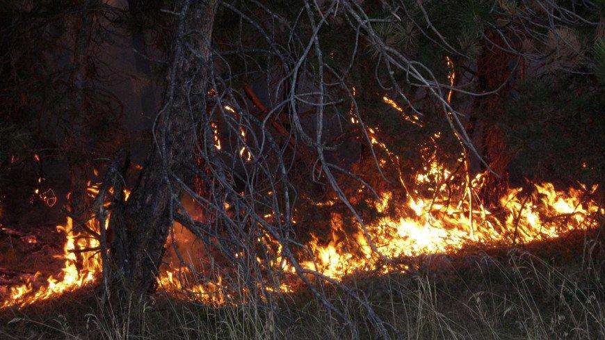 Площадь пожаров в лесах Красноярского края за сутки выросла на 16 тысяч гектаров