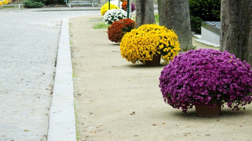 "Фото: Елена Андреева, ""«Мир 24»"":http://mir24.tv/, цветы, клумба"