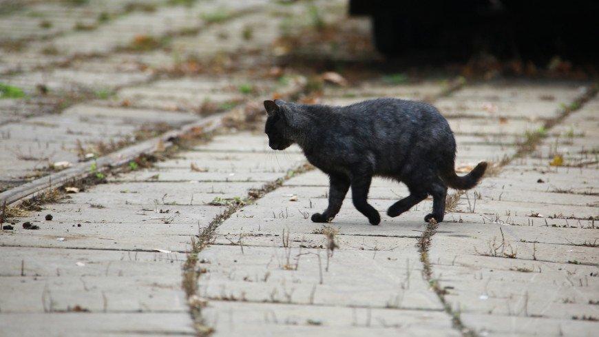 Трамвайное депо им. Русакова, трамвайное депо, пути, трамвайные пути, кошка, кот, животные, животное, шерсть, хвост, когти,