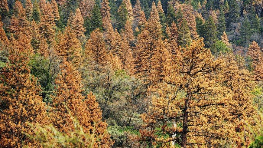 Древнейшие деревья планеты могут заполонить Европу