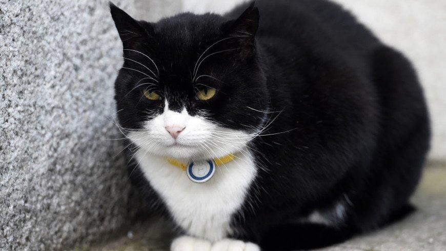 Главный кот британского МИД вышел на пенсию