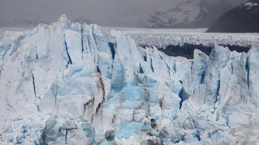 Немецкие ученые выяснили, чем дождевой червь угрожает Арктике