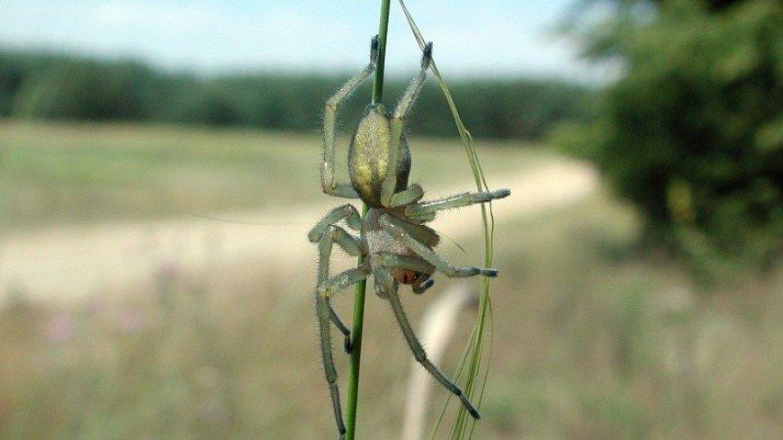 Токсичные и беспощадные: в Ростовской области появились ядовитые пауки