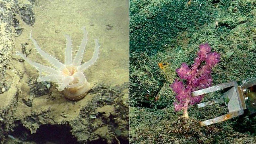 В глубоких водах у Галапагосских островов открыли новую экосистему