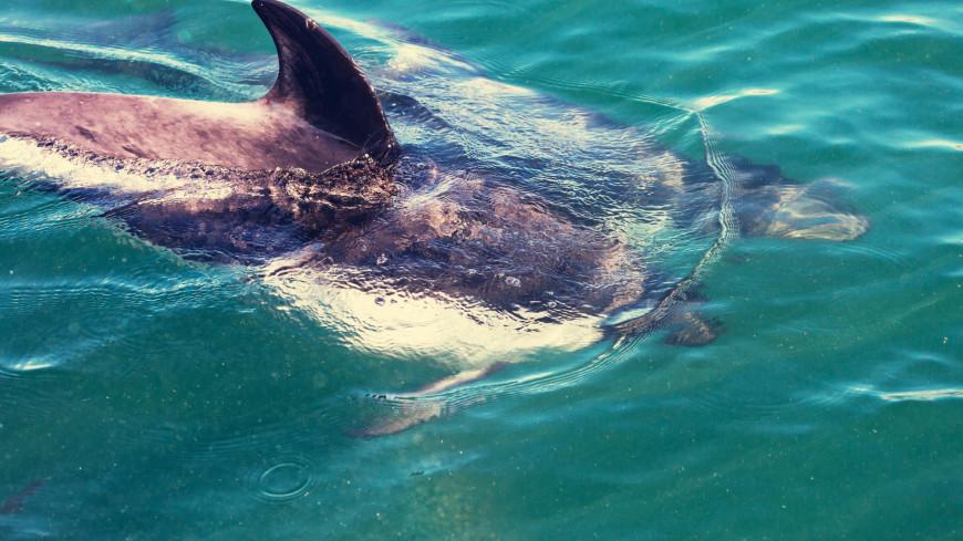 Загадочной эпидемии среди дельфинов нашли объяснение