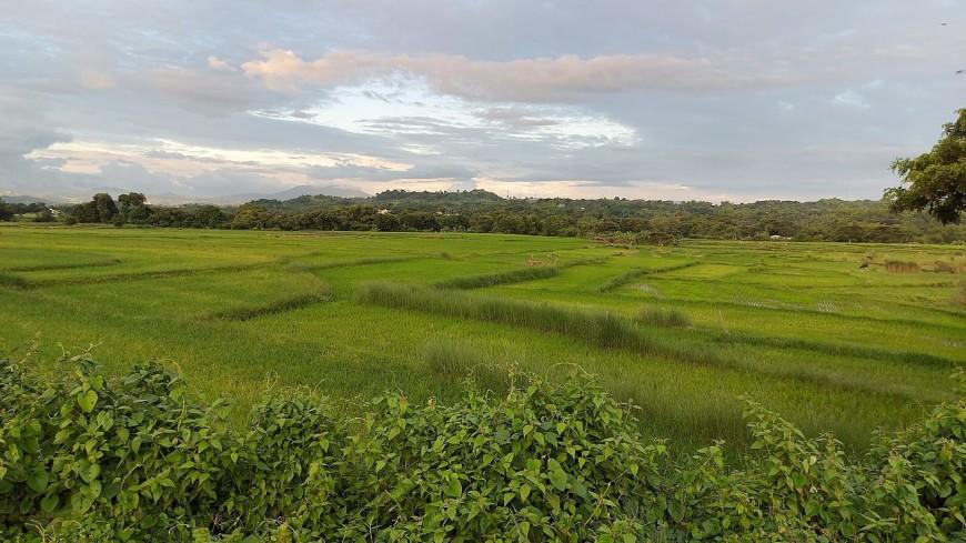 В Китае нашли древнейшие на планете рисовые поля